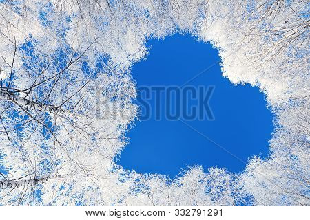 Winter Forest Trees Are Covered With Snow. Shape Heart Of Branches Tree On Blue Sky Background. Beau