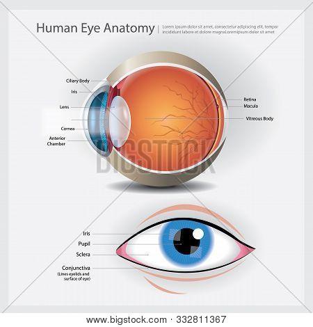 Human Eye Anatomy With Human Eye Vector Illustration