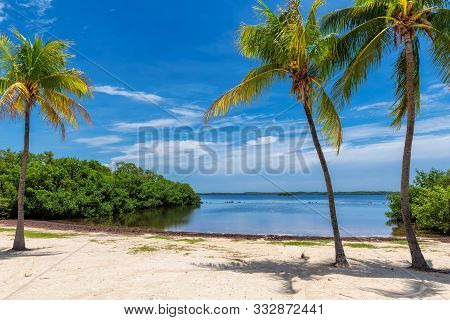 Palm Trees On A Tropical Beach In Florida Keys.