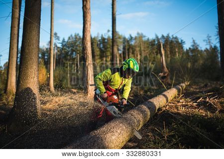 Logger Man Cutting A Tree With Chainsaw. Lumberjack Working With Chainsaw During A Nice Sunny Day. T