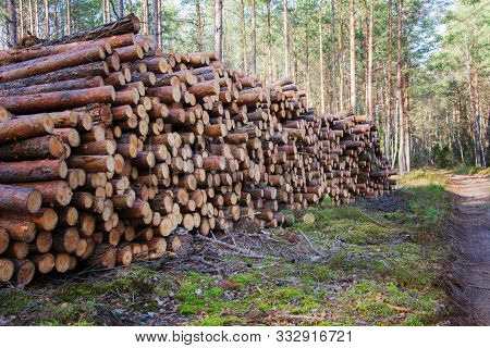 Natural Wooden Logs Cut And Stacked In Pile, Felled By The Logging Timber Industry. Pile Of Felled P