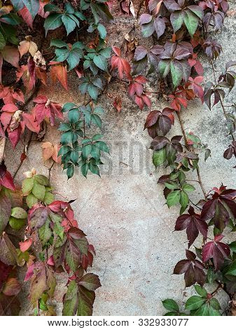 Autumn Colorful Leaves On The Wall