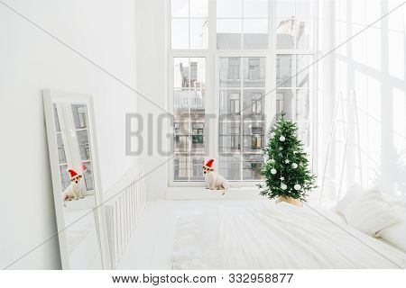 Merry Christmas And New Year Concept. Holiday Decoration. Pedigree Dog In Santa Claus On Windowsill