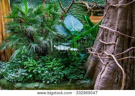 Tropical Plants And A Tree In A Tropical Garden, Exotic Flora Background