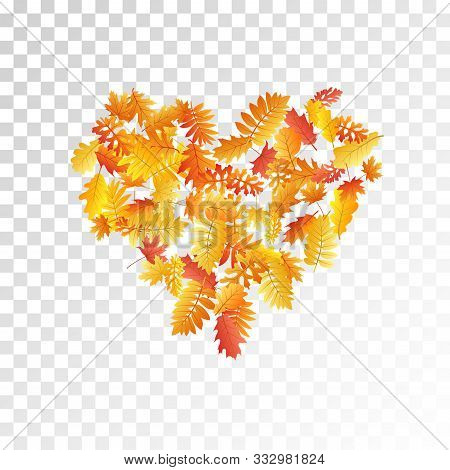 Oak, Maple, Wild Ash Rowan Leaves Vector, Autumn Foliage On Transparent Background. Red Orange Gold
