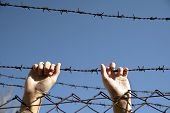 hands reach toward freedom through the barbed wire poster
