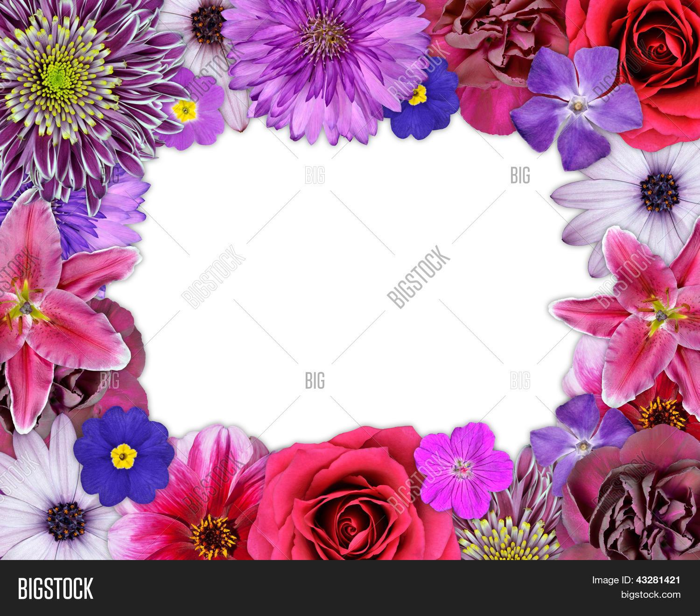 Imagen y foto Flor Marco Flores (prueba gratis)   Bigstock