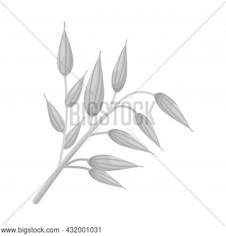 Vector Illustration Of Oat And Grain Symbol. Collection Of Oat And Meal Vector Icon For Stock.