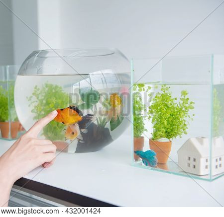 Aquarium For Pet And Hobby During Working From Home
