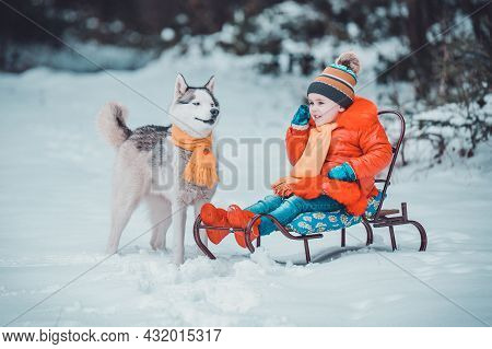 Cute Little Girl Sitting On A Sled, With Her Siberian Husky, A Pet With A Child.