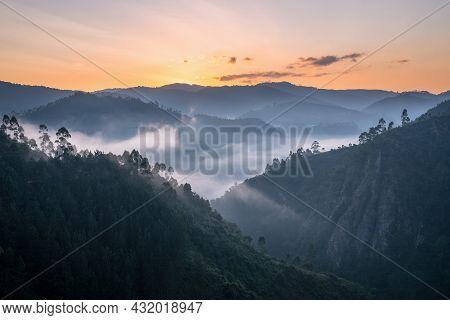 Panoramic Image Of Bwindi National Park With Early Morning Mood, Uganda