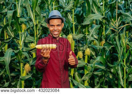 Happy Farmer With Hat Looking At Camera With A Corn In His Hand. African American Farmer With Thumb