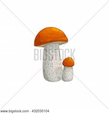 Mushroom, Autumn Fall Harvest, Forest Boletus Isolated Vector Icon. Orange Or Brown Cap Boletus Mush