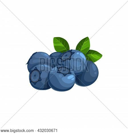 Blueberry Heap With Green Leaves, Isolated Vector Wild Berries On White Background. Cartoon Fresh Gr