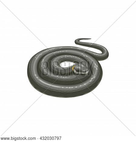Snake Icon, Pest Control Extermination And Disinfection Service, Isolated Vector. Domestic Pest Cont