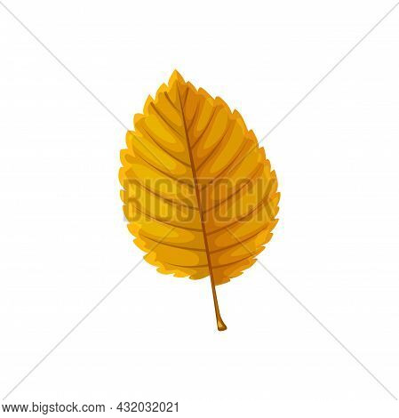 Autumn Leaf Of Tree, Fall Forest Foliage, Isolated Vector. Dry Yellow Beech Alder Or Hazel Tree Leaf