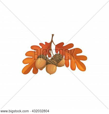 Autumn Oak Leaves And Acorn Vector Icon, Cartoon Fallen Foliage, Dry Tree Leaf Of Brown Color, Desig