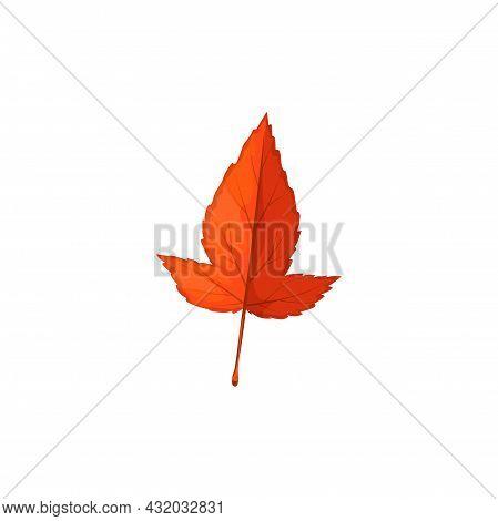 Autumn Maple Leaf Vector Icon, Cartoon Foliage, Fallen Tree Leaf Of Red Or Orange Colors, Tatar Mapl