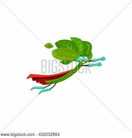 Cartoon Spinach Super Hero Isolated Vector Icon. Vegetable Or Greenery Personage In Cape And Mask Fl