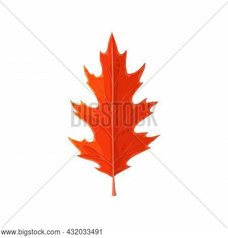 Oak Leaf Red, Autumn And Fall Trees Foliage, Vector Isolated Icon. Forest Autumn Leaves Of Red Oak,