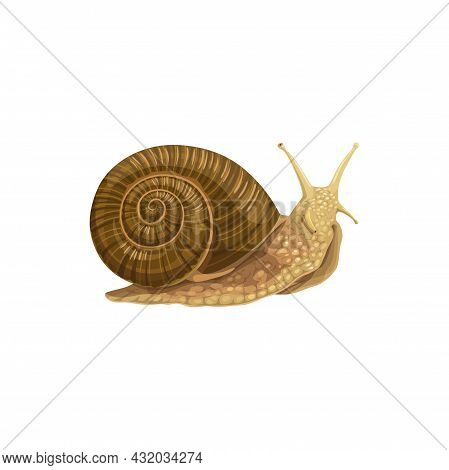 Snail Icon, Pest Control Agrarian Extermination And Vermin Disinsection, Vector. Isolated Snail Slug