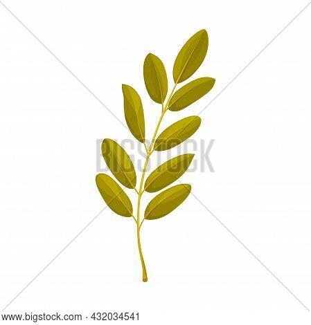 Rowan Leaf Vector Icon, Cartoon Foliage, Fallen Tree Leaf Of Green Color, Rowanberry Plant Leaf Natu