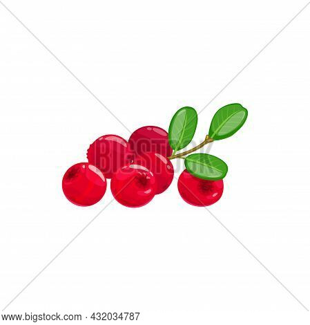 Ripe Lingoberry, Cranberry Red Berries And Green Leaves Isolated Realistic Icon Vector Wild Berries