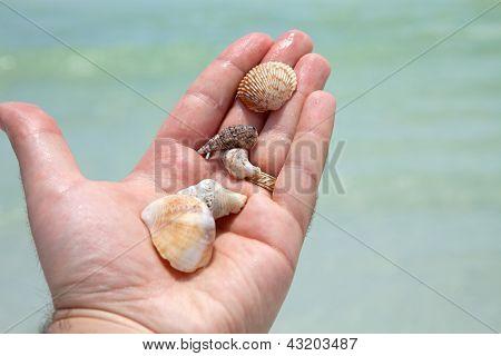 Hand Holding Seashells