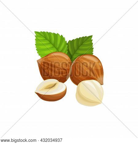 Hazelnut In Hard Shell With Green Leaves Isolated Cartoon Superfood Icon. Vector Hazel-nut, Vegetari