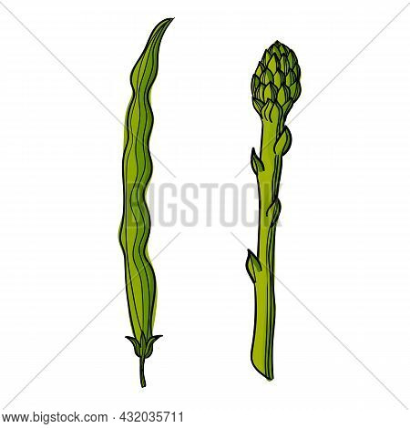 Vector Illustration Of A Bean Pod And Asparagus Using Different Shades Of Green And Strokes.