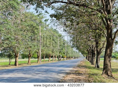 Road Along With Trees On Both Sides poster