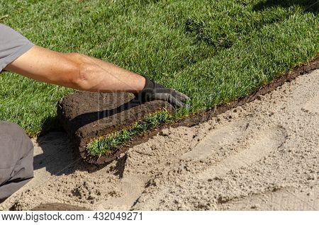 Gardener Laying New Roll Lawn. Male Hands In Gardening Gloves Unrolling Green Grass Rolls