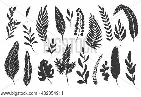 Silhouettes Tropical Leaves. Monochrome Glyph Forest Palm Monstera Fern Hawaiian Leaves. Set Tropica