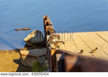 Sparrows On Pier On Lake Pier On Sunny Autumn Day.