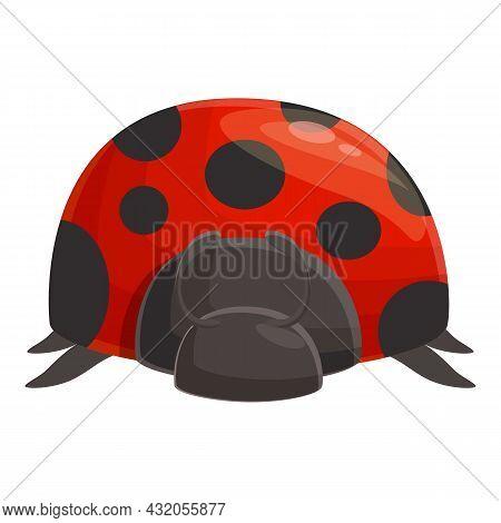 Ladybird Beetle Icon Cartoon Vector. Garden Ladybug. Bug Insect