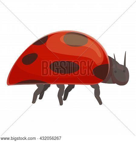 Lady Beetle Icon Cartoon Vector. Ladybug Spring. Bug Insect
