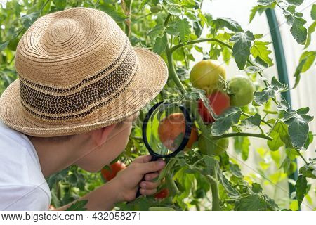 Adorable Little Child Boy In Straw Hat Look At Green Plant Leaves With Magnifying Glass. Kid Observi