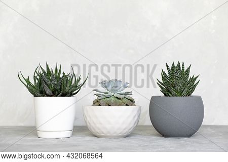 Different Types Of Succulents, Haworthia And Echeveria In Modern Pots On A Gray Concrete Background.