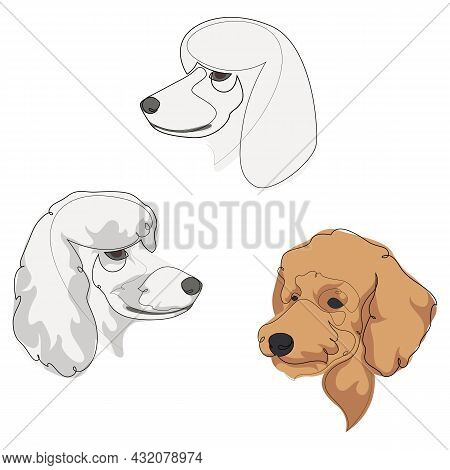 Set Of Hand Drawn Line Art Illustrations Of Poodle Dog Characters Portraits With Colour.