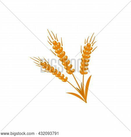 Ears Of Wheat Or Barley For Cereal Production Flat Vector Illustration Isolated.