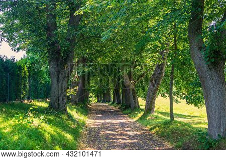 Tree Avenue, Path Between Mature Deciduous Trees