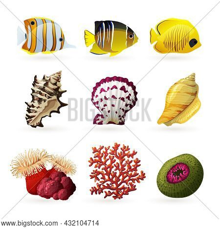 Sea Fauna Decorative Colored Icons Set With Fishes Shells And Corals Isolated  Vector Illustration