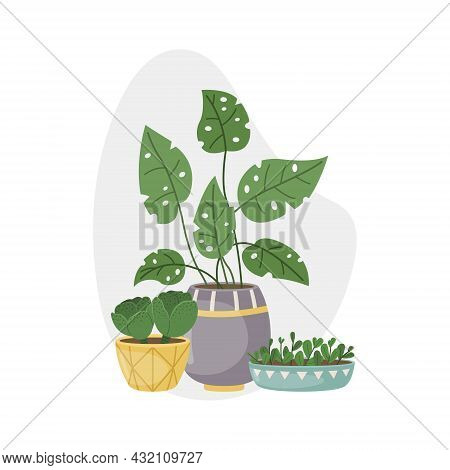 Vector Illustration With Home Plants In Pots. Decorative Plants In The Interior Of The House. Flat S