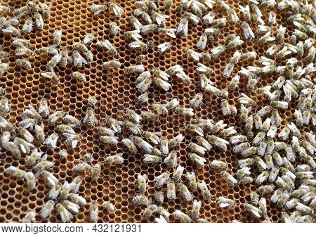 Abstract Hexagon Structure Is Honeycomb From Bee Hive