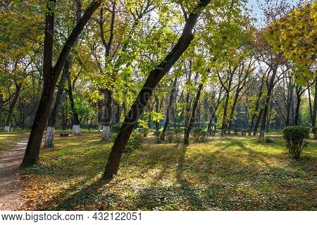 City Park On A Sunny Autumn Day. Trees In Green And Yellow Foliage