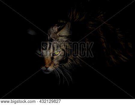 Creepy Horror Cat. Angry Evil Feline Demon, Spooky Animal Over Black Background.