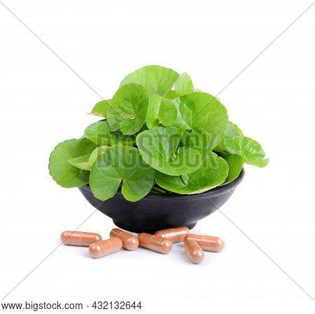 Asiatic Leaf Herb Gotu Kola, Indian Pennywort, Centella Asiatica, Isolated On White Background. Extr