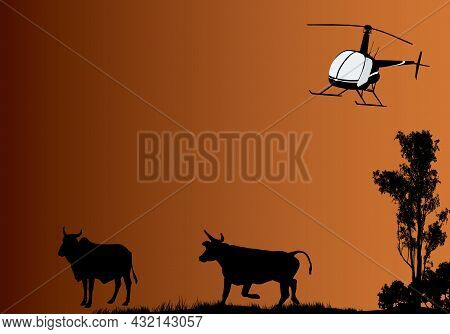 Mustering Time By Helicopter In Outback Australia