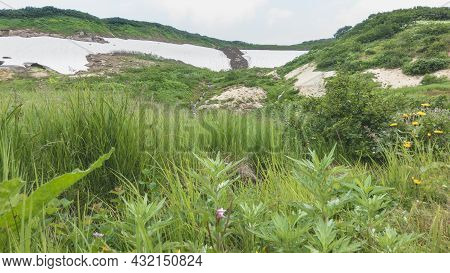Lush Green Grass And Wildflowers Grow In An Alpine Meadow. On The Mountainside, You Can See A Stream