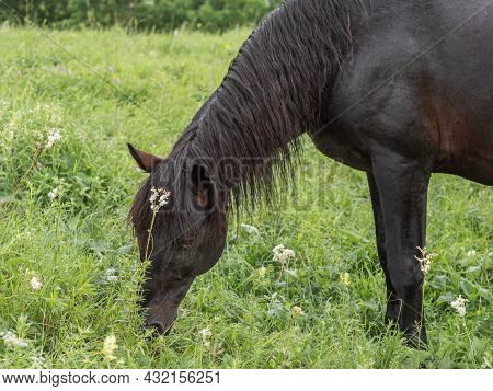 A Close-up Of A Brown Horse With A Beautiful Mane Stands Sideways To The Camera. He Tilts His Head,